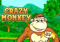 Посети страну диких обезьян со слотом Crazy Monkey!